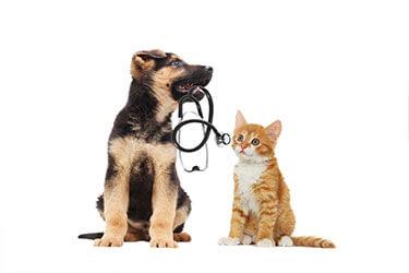 Blog cani : come funziona l'assicurazzione per cane e gatto