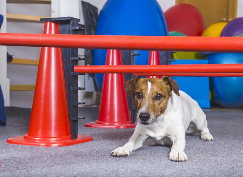 Cane che salta addosso: Perchè il cane salta addosso a tutti?