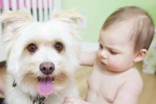 Cani e neonati: i benefici sui nostri bambini