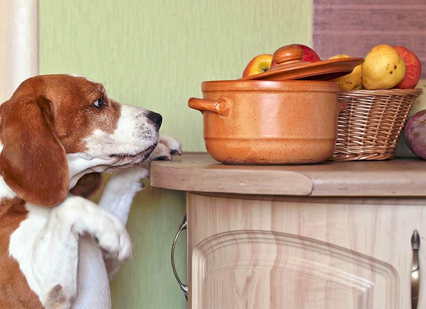 https://www.assuropoil.it/wp-content/uploads/che-frutta-possono-mangiare-i-cani.jpg