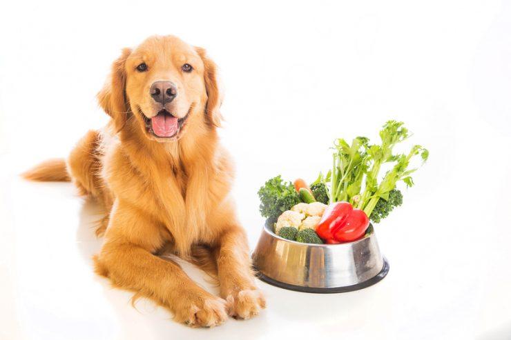 Cibo vegano per cani : cane vegetariano