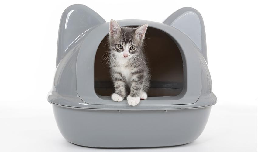 Come abituare il gatto alla lettiera ? Gatto sporco