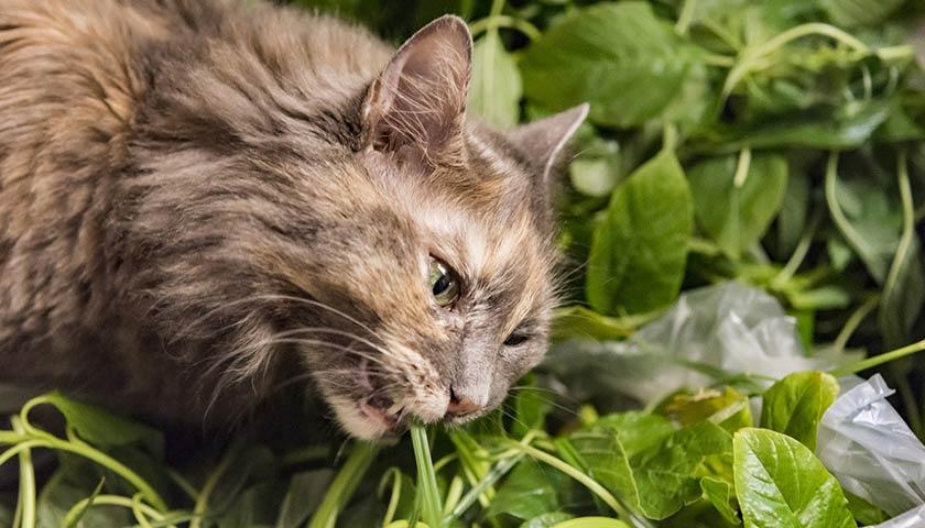 https://www.assuropoil.it/wp-content/uploads/come-allontanare-i-gatti-dalle-piante.jpg
