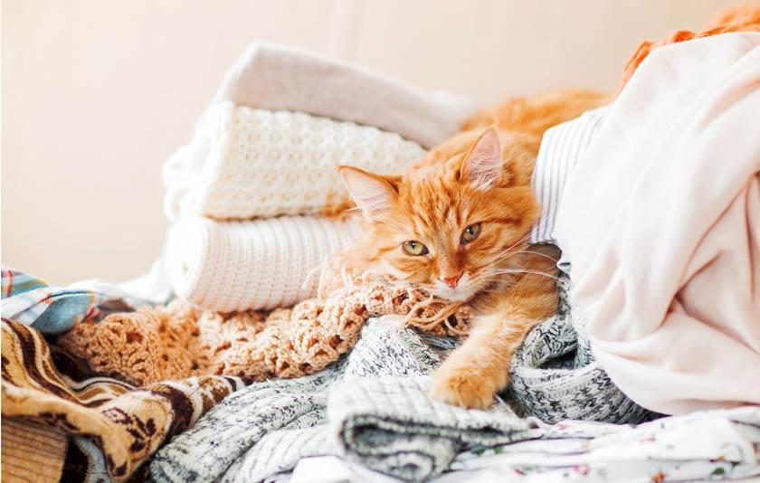 https://www.assuropoil.it/wp-content/uploads/come-dorme-il-gatto-il-mio-gatto-dorme-sui-miei-vestiti.jpg