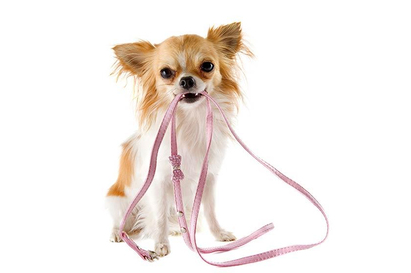 Tecniche di base per educare un cane