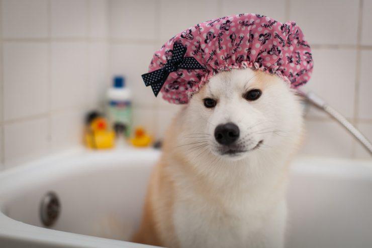 Come lavare il cane : shampoo per cane