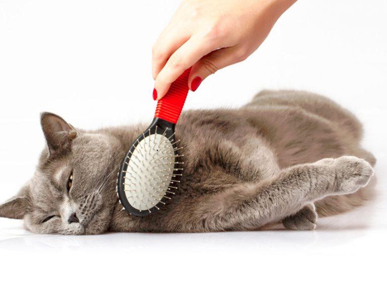 Come spazzolare il gatto ?
