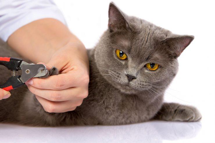 Come tagliare le unghie al gatto ?
