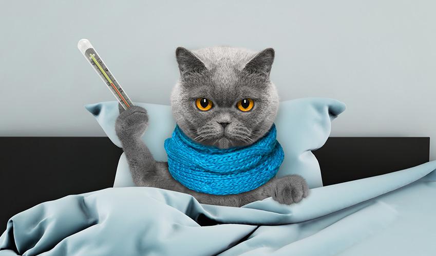 Febbre gatto: Come capire se il mio gatto ha la febbre?