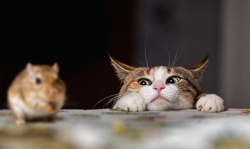 https://www.assuropoil.it/wp-content/uploads/gatti-cacciatori.jpg