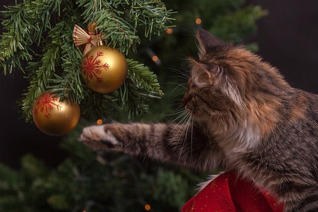 https://www.assuropoil.it/wp-content/uploads/gatti-e-albero-di-natale-come-allontanare-i-gatti.jpg