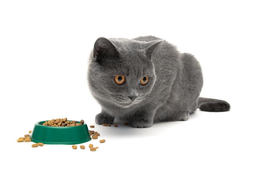 https://www.assuropoil.it/wp-content/uploads/gatto-che-non-mangia.jpg