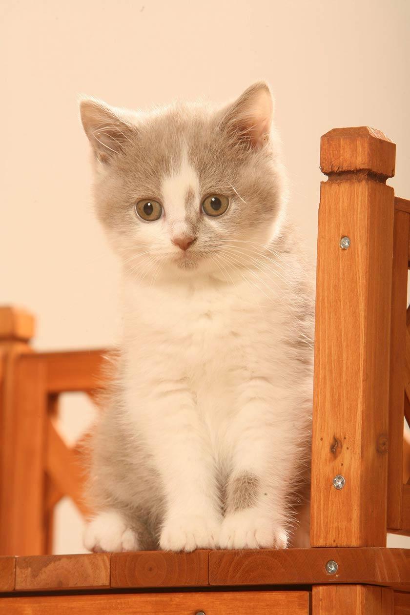 Gatto comportamento : gatto timido, gatto freddo