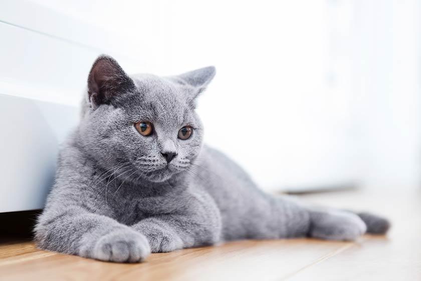 Gatto in appartamento : Come tenere un gatto in casa
