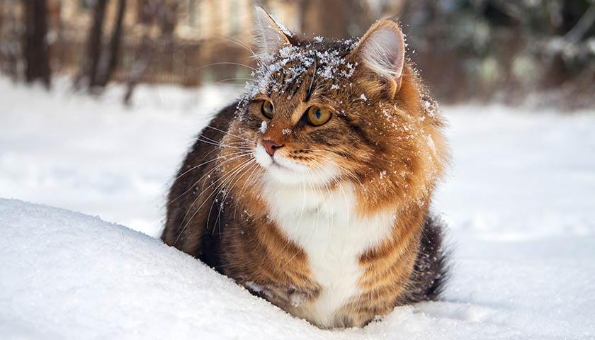 https://www.assuropoil.it/wp-content/uploads/i-gatti-soffrono-il-freddo.jpg