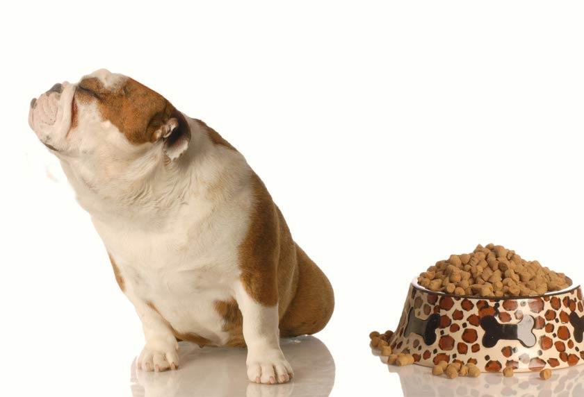 Il cane non mangia : cosa fare ?