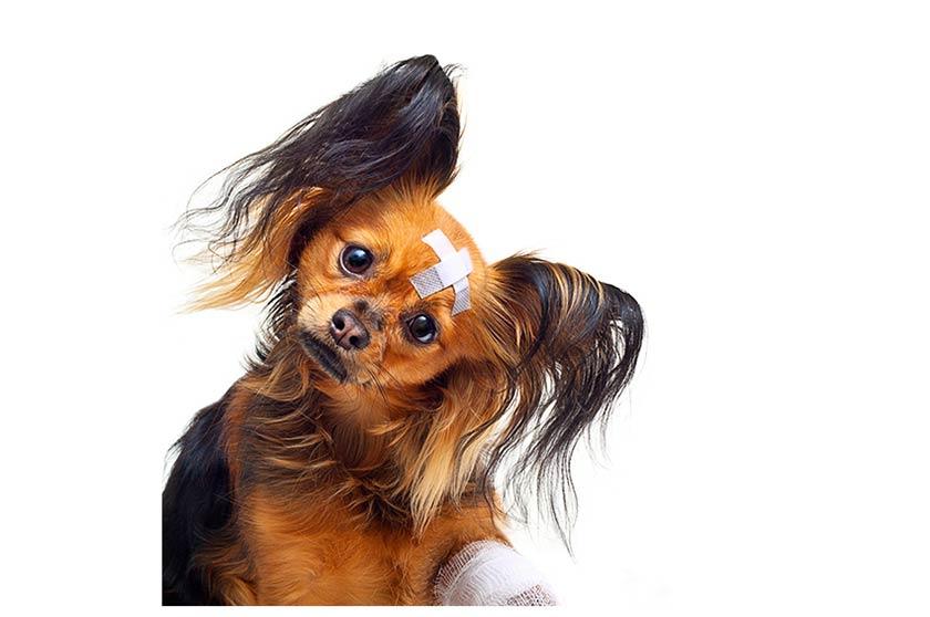 Malattia della pelle del cane : Demodicosi cane