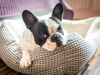 Malattie canine: Le malattie dei cani più diffuse