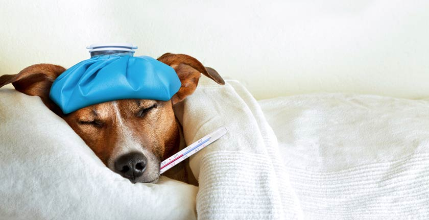 https://www.assuropoil.it/wp-content/uploads/malattie-canine.jpg