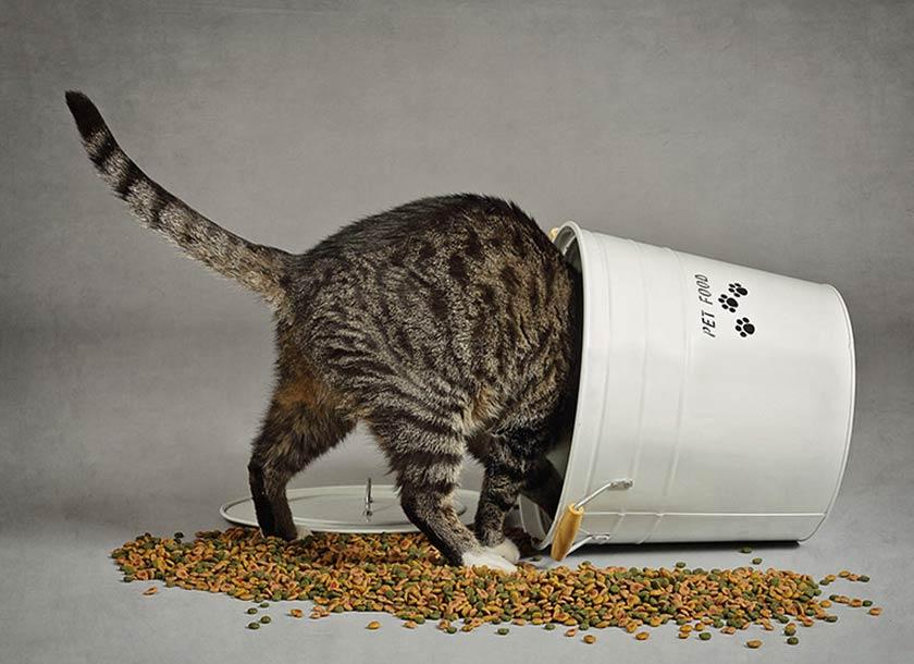 https://www.assuropoil.it/wp-content/uploads/mangiare-per-gatti-nutrire-gatto.jpg