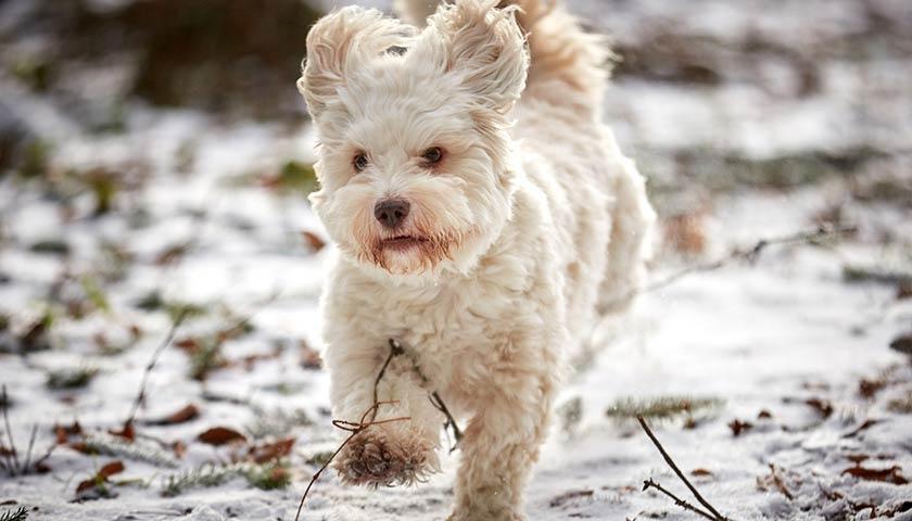 https://www.assuropoil.it/wp-content/uploads/ogni-quanto-portare-fuori-il-cane-durante-linverno.jpg
