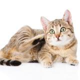 Parassiti gatto: Come evitare i parassiti
