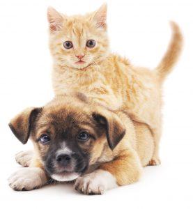 Preventivo assicurazione cane e gatto