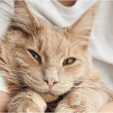 Preventivo assicurazione gatto: come funziona?