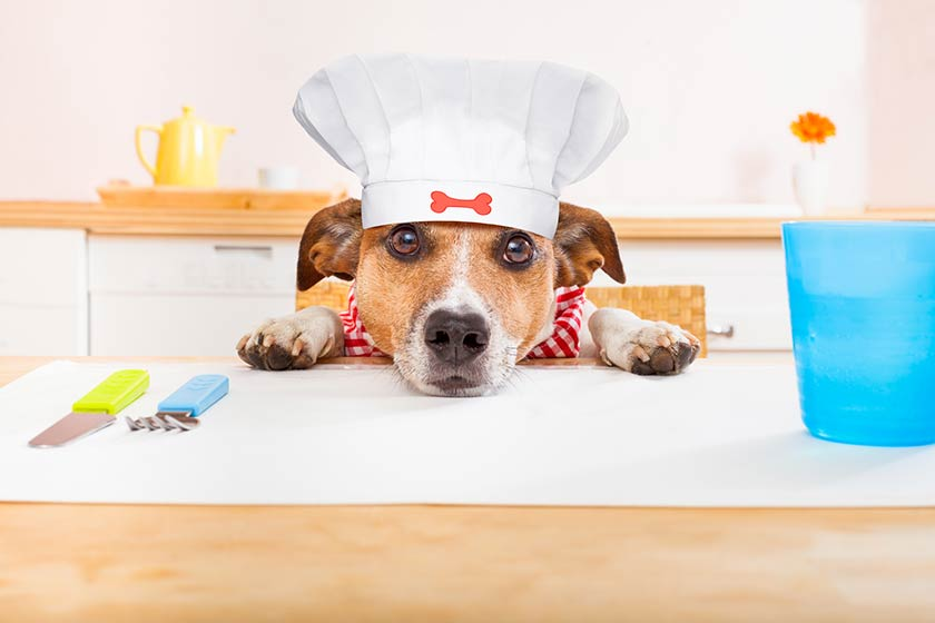Ricette cani : Riso vitello e carota