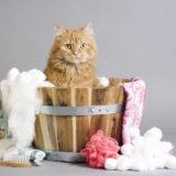 Shampoo per gatto: come lavare il gatto?