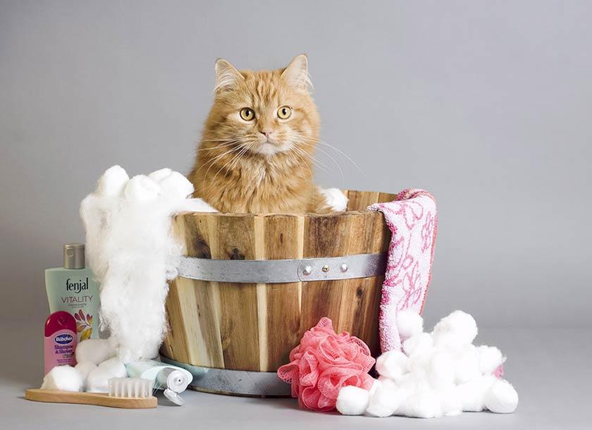 https://www.assuropoil.it/wp-content/uploads/shampoo-per-gatto-come-lavare-il-gatto.jpg