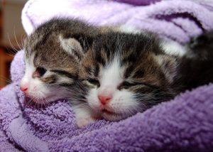 Sterilizzare gatta, sterilizzazione gatta